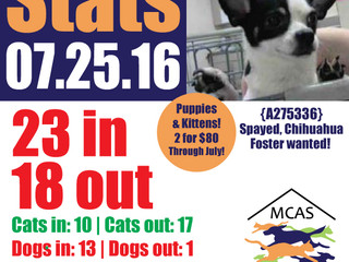 MCAS Intakes & Daily Stats - 07.25.16 - 23 pets in, 18 pets out