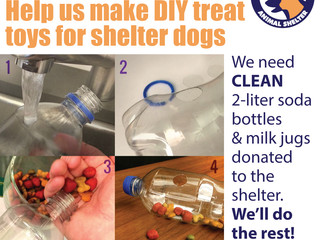 Doggie Enrichment! You can help!