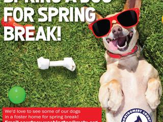 Spring a Dog for Spring Break!
