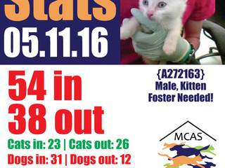 MCAS Intakes & Daily Stats - 05.11.16 - 54 pets in, 38 pets out