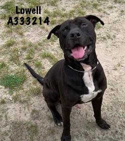 Lowell, ID: A333214