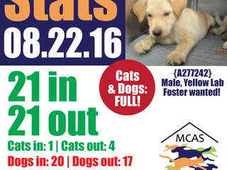 MCAS Intakes & Daily Stats - 08.22.16 - 21 pets in, 21 pets out