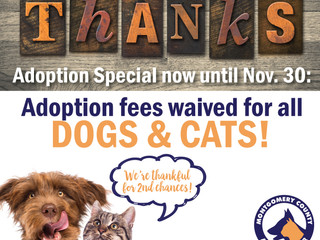 Give a shelter pet a reason for thanks! Adoption fees waived until Nov. 30