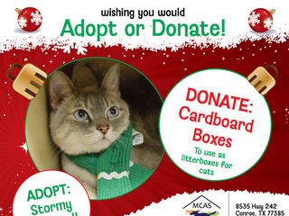 12 Pet Wishes of Christmas! DAY 12: Our homeless pets are wishing you would adopt or donate this hol