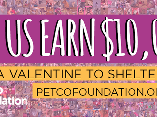 Upload your #sheltervalentine and help us earn a $10,000 lifesaving grant!