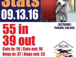 MCAS Intakes & Daily Stats - 09.13.16 - 55 pets in, 39 pets out