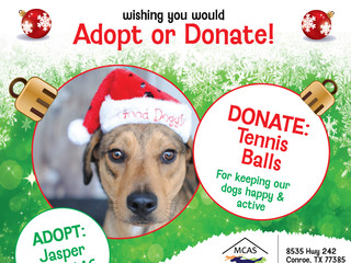 12 Pet Wishes of Christmas! DAY 3: Our homeless pets are wishing you would adopt or donate this holi