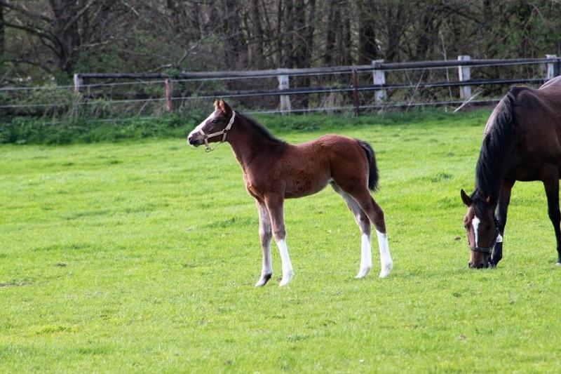 Pegase Insurance Assurance poulains a l'elevage foals