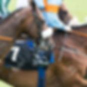 64776349-les-chevaux-de-course-et-des-jo