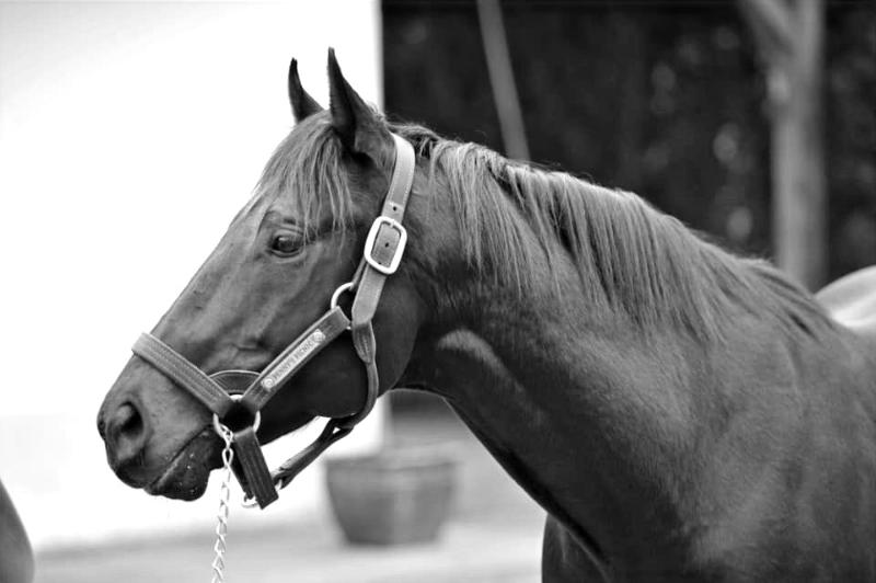 Pegase Insurance Assurance cheval maladie accident colique frais de chirurgie