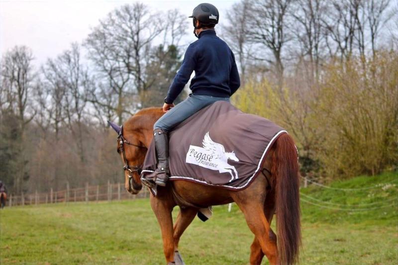 Pegase Insurance Assurer cheval sport