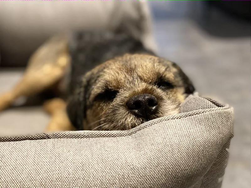 Pegase Insurance Assurance chien animal de compagnie domestique