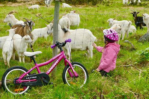 Sykkel - barn og geiter.jpg