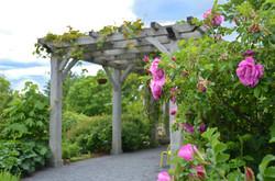 Rose and Perennial Arbor