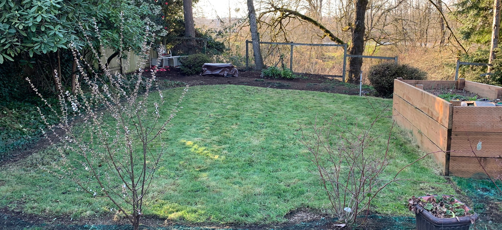 Back Yard Grass Mold and overgrowth