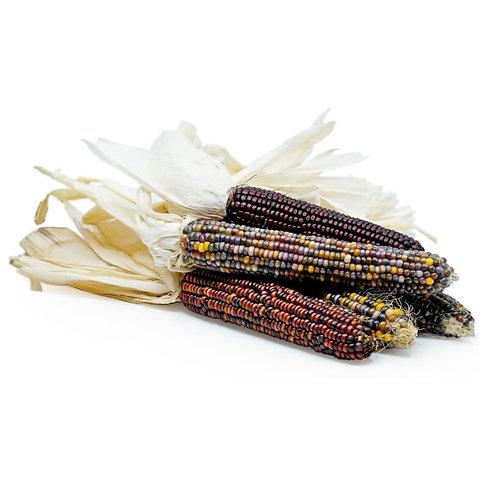 Muhindi | Kwanzaa Corn