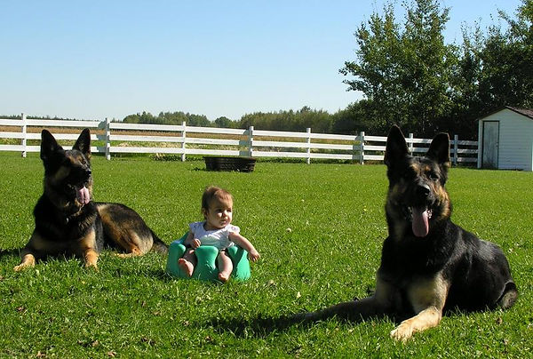 2 male German Shepherds and baby