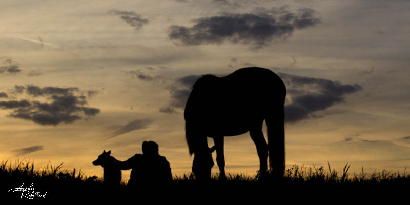 Contre jour photo d'un cheval dans la nature