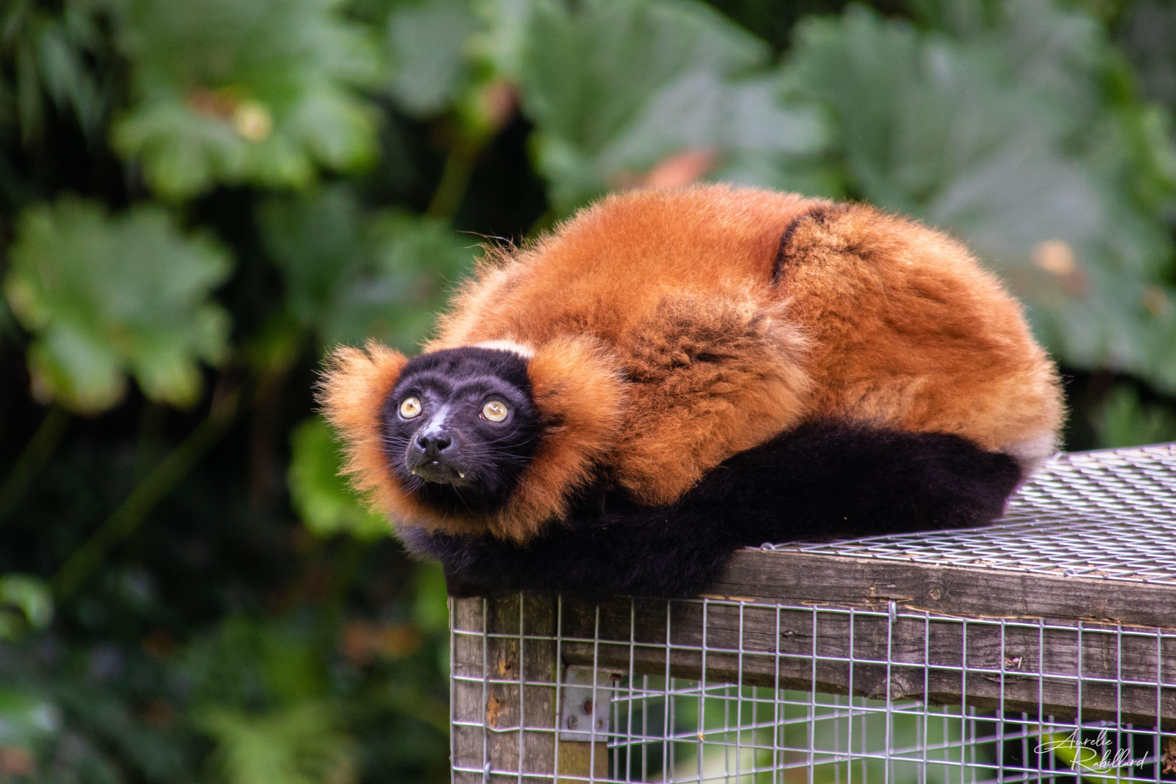 Le parc zoologique de Champrepus est un parc zoologique français privé situé sur la route Villedieu-