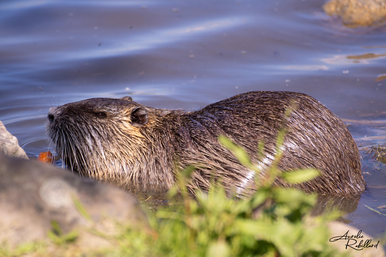 nature paysage beauté vie photos calavados 14 normandie villers sur mer Molly deams nature animaux h