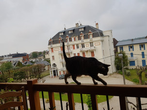 detourage chat balcon recueil.jpg