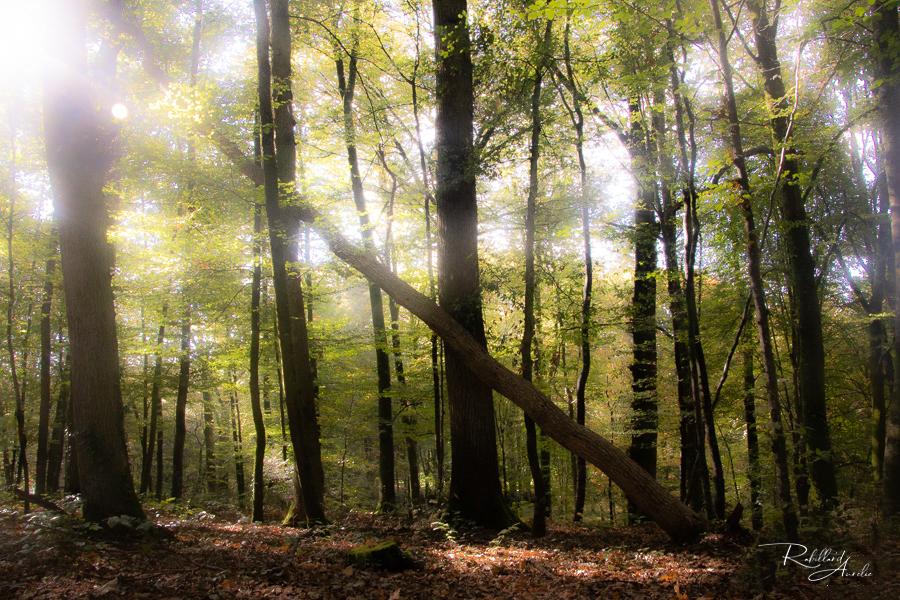 nature paysage beauté vie