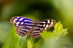Des papillons et des oiseaux en liberté parmi des plantes et des fleurs tropicales rares, des poisso