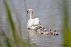photos deauville calavados 14 normandie villers sur mer Molly deams nature animaux herbe couleur pay