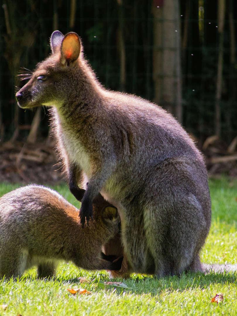 zoo champrepus rabillard aurelie animaux
