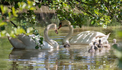 photos calavados 14 normandie villers sur mer Molly deams nature animaux herbe couleur paysage