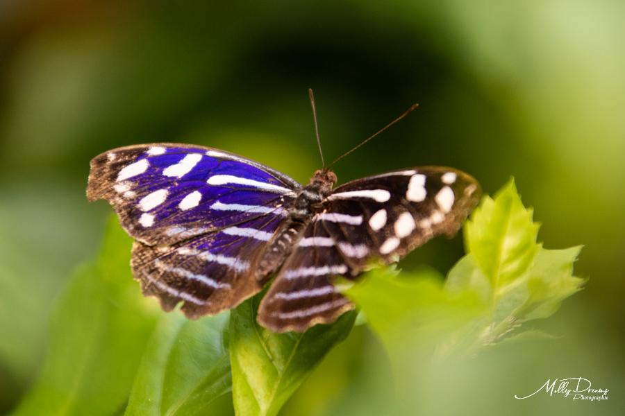 Molly DREAMS Naturospace 14 Honfleur Calvados villers sur mer normandie nature oiseau papillon vert