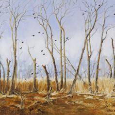 Marsh Birds - Renwick Marsh