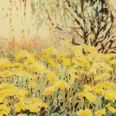 Eagan's Field [Sold]
