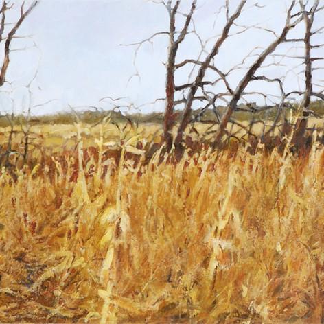 Rook's Field