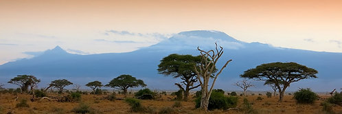 Kilimanjaro Panorama (3:1) #LS016