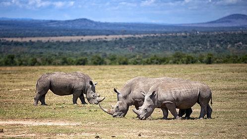 Lake Nakuru - White Rhinos(16:9) #RH004