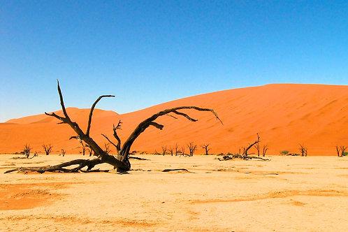 Sossusvlei (Namib Desert)