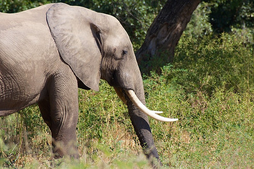 ManaPools- Elephant EP#005