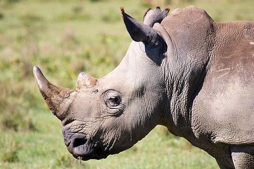 Lake Nakuru - White Rhino #DT033