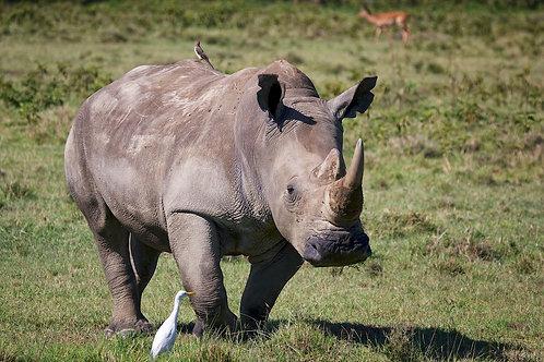 Lake Nakuru - White Rhino #RH005