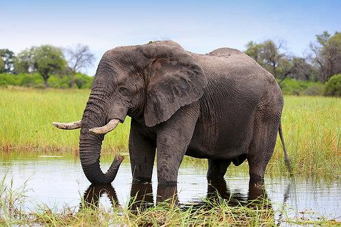 Khwai - Elephant Bull #DT028