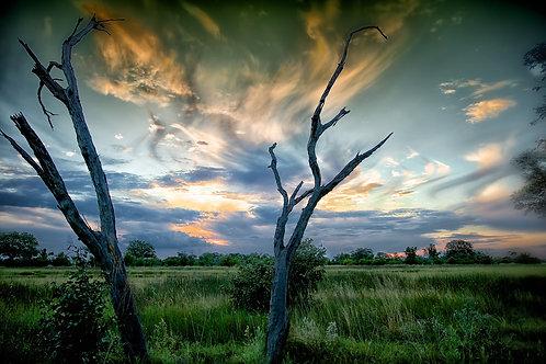 Moremi Sunset