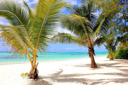 Coast Zanzibar #CB002