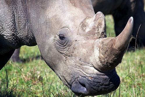 Lake Nakuru - White Rhino #RH001