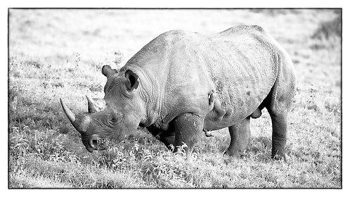 Lake Nakuru - Black Rhino (bw) (16:9) #RH002