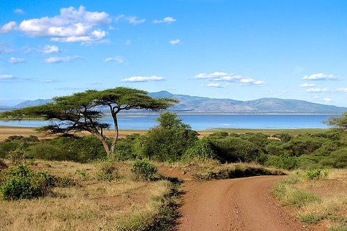 Lake Manyara #LS015
