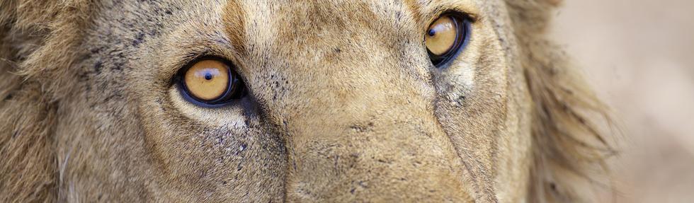 hwg-photography.com • Fotodrucke • Fotoreisen • Safaris