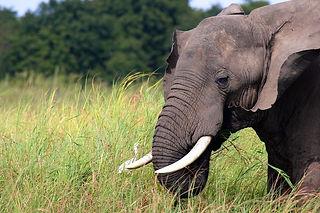 Elefanten/Elephants