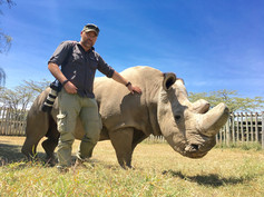 The last Northern White Rhino male