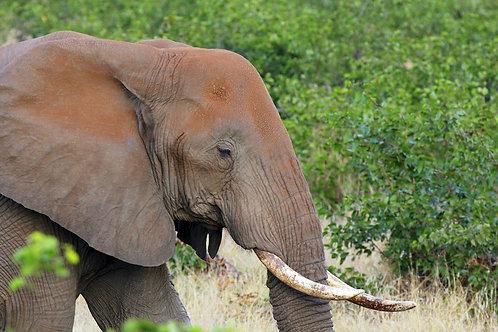 Kruger - Red Elephant EP#002